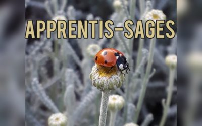 Quelques apprentis-sages